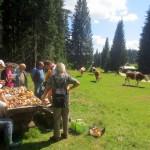 Obiskale so nas krave